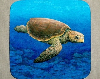 Loggerhead Turtle Coaster set of 4