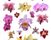 Orchids Digital Collage Sheet, flowers, pink, lavender, maroon,  No. 197