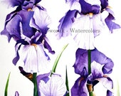 Royal Blooms- signed limited edition watercolor print