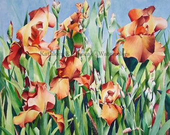 Field of Allaglow- signed limited edition watercolor print