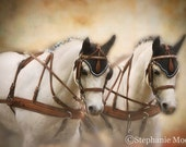 Fine Art Horse Photography, 5x7 Horse Picture, Horse Art
