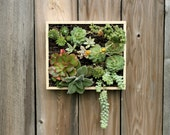 Step-by-Step PDF Instructions: Wall-Mounted Succulent Garden