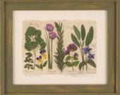 Small Herb Garden Giclee' Print