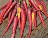 Cosmic Purple Carrot Garden Seeds Very Unique Organic Heirloom 100 seeds