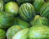 Heirloom Sugar Baby Watermelon Seeds