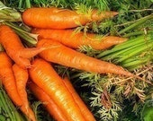 Heirloom Chantenay Carrot Seeds