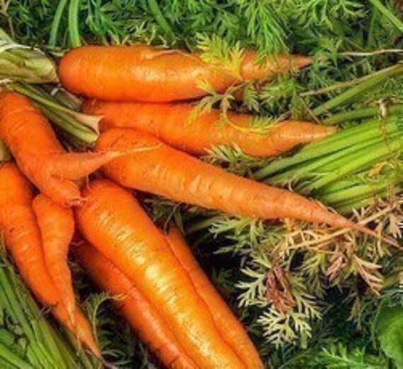 Heirloom Chantenay Carrot Seeds