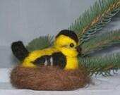 Sweet Little Bird In Nest