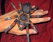Mexican Red Knee Tarantula  Brachypelma smithii  Spider Steam Punk  Iron on Patch