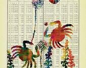 Original Artwork Sea Crabs At Play Vintage Book Page Art on Antique Nautical Almanac