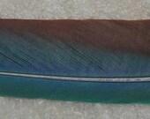 Macaw Tail Feather Greenwing Macaw Long Peyote Fan Natural Budget