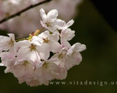 Cherry Blossom on Easter Day - Fine Art Photograph,4x6 matted, ready to frame - IN STOCK