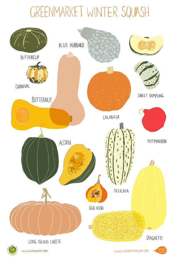 Winter Squash Poster