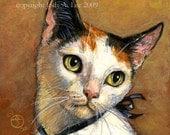 Japanese Bobtail Cat Original Oil Painting