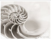 Nautilus shell still life photography spiral chambered sea shell