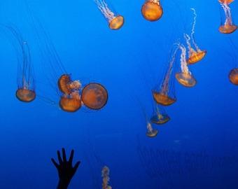 High Five - Jellyfish - 4x6 Photograph