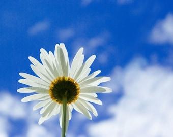Democrazia E Liberta - Daisy Flower - 4x6 Fine Art Photograph