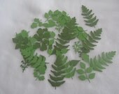 50  Assorted Leaves and Fern Leaves Embossed Cardstock die cuts