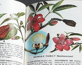 vintage illustrated book- exotic plant & flower nature guide