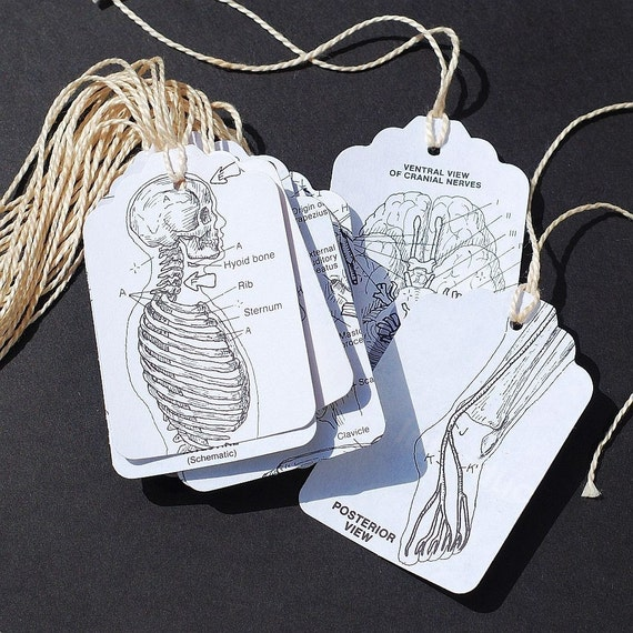 recycled gift tags- 15 human anatomy tags