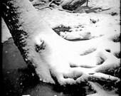 Winter's Gift