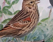 1915 Vintage Sparrow print, antique Bird Illustration by Louis Agassiz Fuertes, wall art print