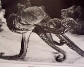 1929 Octopus illustration - Vintage Devil Fish print
