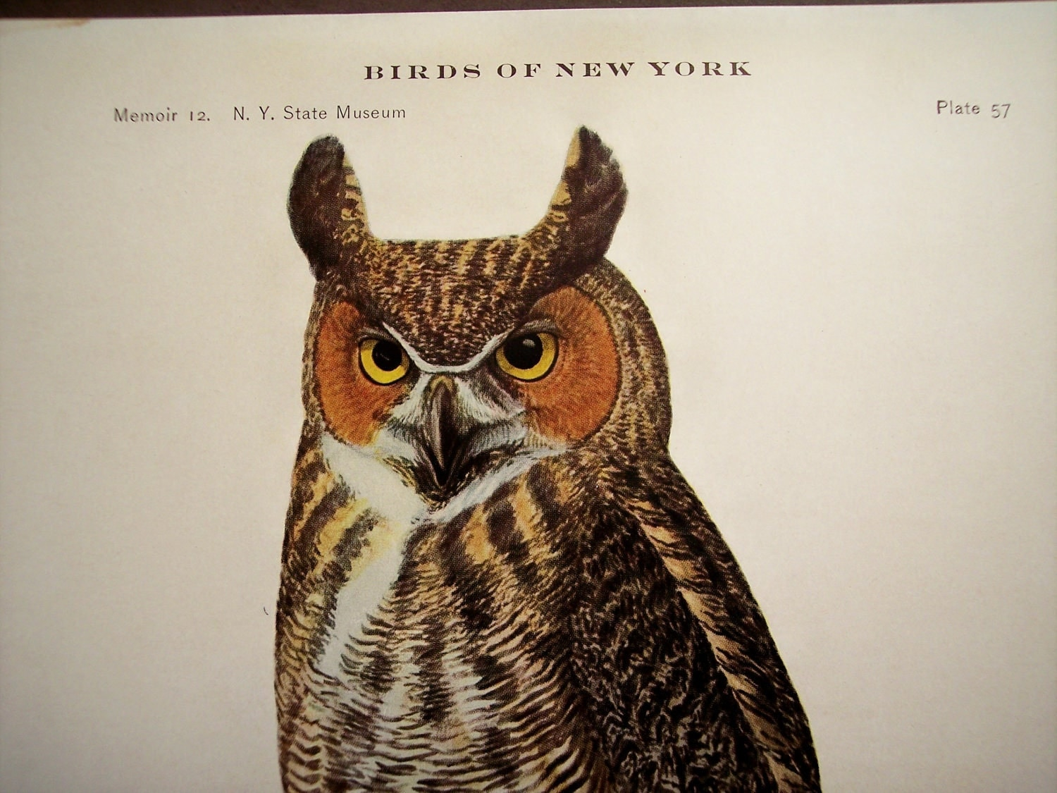 Like this item Great Horned Owl Illustration