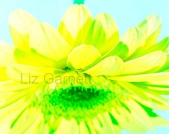 A6 Postcard Size Limited Edition Photograph of Yellow Gerbera Flower (UK576/02) 1/1