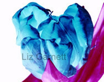 A6 Postcard Size Limited Edition Photograph of Blue Tulip (UK598/31p) 1/1