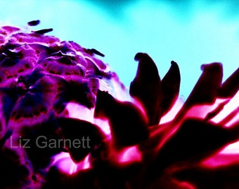 A6 Postcard Sized Limited Edition Photograph of Purple Pineapple (UK614/34) 1/1