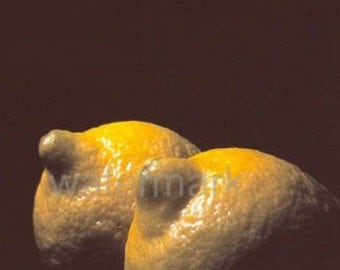A6 Postcard Sized Limited Edition Photograph of Lemons 1/1
