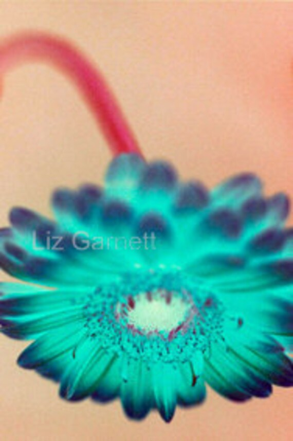 A6 Postcard size limited edition photograph of Blue Gerbera (UK621/11 - 1/1)