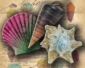Instant Download Digital Collage Sheet Sea Shell Images for your Artwork - Download and Print - DigitalPerfection digital collage sheet 014
