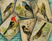 INSTANT DOWNLOAD Printable Birds on Vintage Postcards ATC Backgrounds 2.5 X 3.5 inch - DigitalPerfection digital collage sheet 799