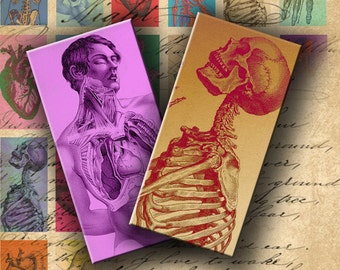 INSTANT DOWNLOAD Digital Collage Sheet Anatomy in Colors 1 X 2 inch Halloween Images - DigitalPerfection digital collage sheet 513