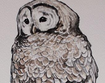 "Barred Owl (print) - 8"" x 10"""