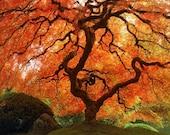 "Fall Nature Photography ""Autumn Zen"" Red Orange Japanese Maple Tree Photo, Portland Japanese Garden Art Print, Simple Asian Art Wall Decor"