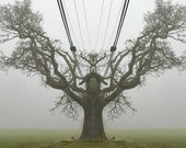 "Nature Photography ""The Tree King"" Surreal Art, Fog Photo, Gnarled Tree Print, Surreal Photo, Oak Tree Photo, Unique Art Print, Square Print"