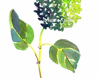 Green Hydrangea Watercolor Print