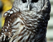 Barred Owl - 5x7 Original Signed Fine Art Photograph