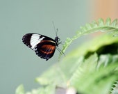 Butterfly on Leaves 2 - 5x7 Original Signed Fine Art Photograph