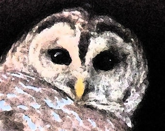 Barred owl close up card or photograph