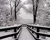 Winter Photograph 8x10 Snowfall Symmetry
