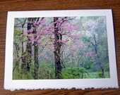 Blank Photo Note Card 5x7 - A Springtime Vision of Flowering Redbud and Dogwood Trees - Greeting Card Art