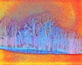 Art Photography Tree 11x14 Color Woodland Abstract Photograph Print - Winter Trees in Orange