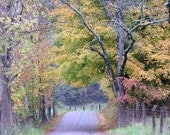 Autumn Country Road 4x6 Fall Foliage in Ohio Landscape Picture Photography Print