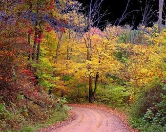 Autumn Photograph 8x10 Road Less Traveled Wall Art, Hocking Hills, Ohio