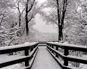 Winter Photo 5x7 Fine Art Snowfall Symmetry Winter Photography Print Black and White
