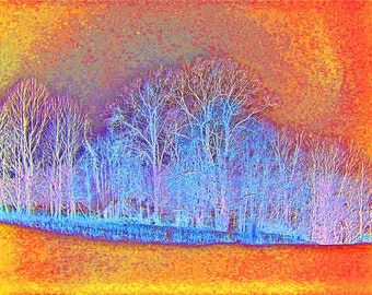 Winter Trees in Orange 16x20 Color Abstract Art Landscape Photograph